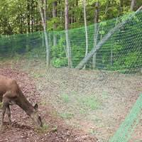 Electric Fence Homemade Electric Fence Deer
