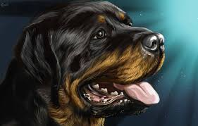 wallpaper dog rottweiler rottweiler