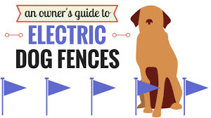 Invisible Dog Fence 101 Guide Dog Fence Wireless Dog Fence Dog Boarding Near Me