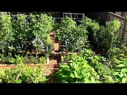 grow a lot of food in a small garden