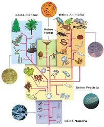 Biodiversidad: Clasificación de los seres vivos