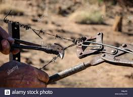 A Man Repairs A Barb Wire Fence In Outback Australia Using Fencing Pliers And Wire Strainers Stock Photo Alamy