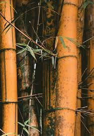 The Use Of Bamboo For Erosion Control And Slope Stabilization Soil Bioengineering Works Intechopen