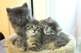 wallpaper cats kittens felines