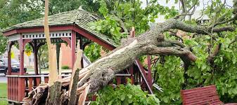 How To Protect Your Garden From Wind Dave S Garden