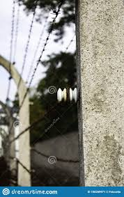 Wire Fencing Editorial Photo Image Of Barrier Electric 158269971