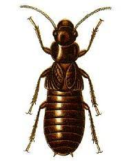 View Anti Termite Treatment Wikipedia Background