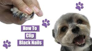 how to clip black nails you