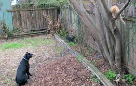 Creating A Pet Safe Garden A Guide To Toxic And Non Toxic Plants Epic Gardening