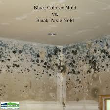 black colored mold vs black toxic mold