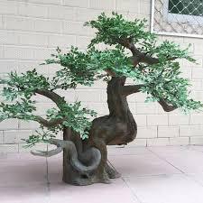 bonsai indoor pine tree whole