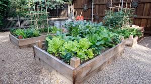 grow and eat veggies this fall