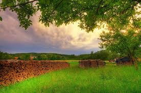 صور اشجار و طبيعة خلابة