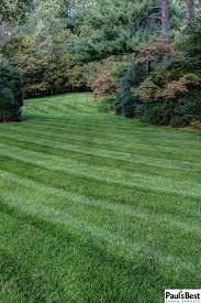 portfolio lawn mowing fertilization
