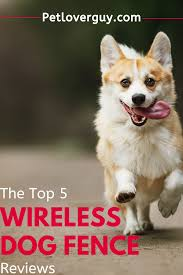 The Top 5 Wireless Dog Fence Reviews For Small Dogs Wireless Dog Fence Dogs Dog Fence