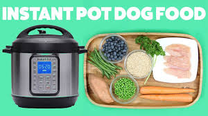 easy diy dog food you can make in your