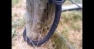 How To Connect Electric Fence Across Gate Electric Fence Fence Pasture Fencing