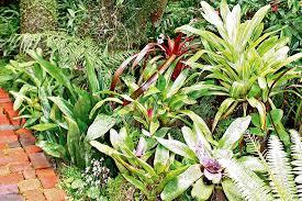 how to plan a tropical garden