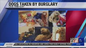memphis woman s dogs stolen during home