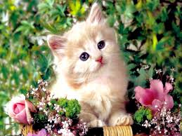 أجمل صور قطط 2020 Hd صور وخلفيات أحلى قطط في العالم كيوت وجميلة