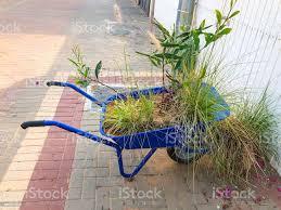 Variety Of Flowers And Plants Kept In Blue Wheelbarrow Near The Fence On The Street Stock Photo Download Image Now Istock