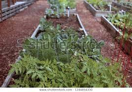 row community garden planters royalty