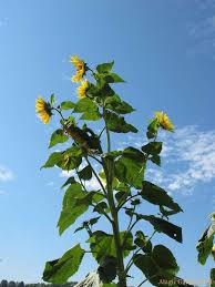 gap fillers for your flower garden