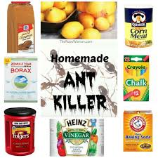 8 sure ways to get rid of ants the