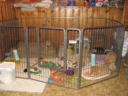 Canineu Zuma X Rowan Pups 2012
