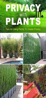 Privacy With Plants The Garden Glove Privacy Landscaping Backyard Landscaping Privacy Plants