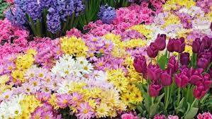 图片 flower 桌面flowers