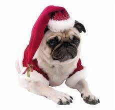 Christmas Pug Dog Transparent ...
