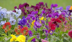 top 10 winter bedding plants thompson