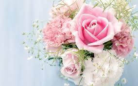 roses flowers carnations white flower
