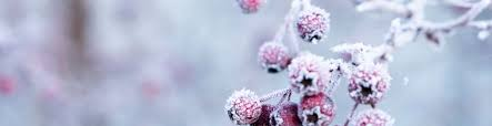 Image result for pics of winter