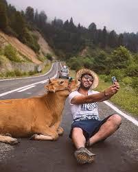 Making friends on the road 😄 Artvin, Turkey. Photo by @dr.iyasar ��� |  Animals, Animals friends, Cute animals
