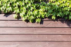 What Can You Use To Kill Vines That Grow On Your Fence Home Guides Sf Gate