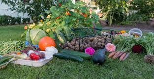 6 vegetable planting tips for beginners