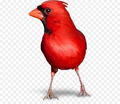 Pájaro, Rojo Reinita, Ergaticus imagen png - imagen transparente ...