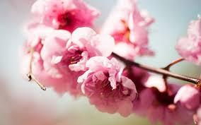 صورة ورود باللون الوردي في الربيع