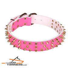 today dog collar best selection