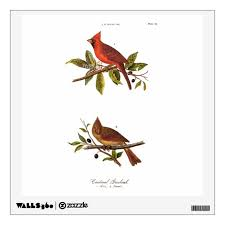 Vintage Cardinal Song Bird Illustration 1800 S Wall Decal Zazzle Com