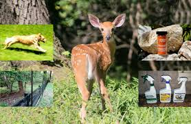 Want To Keep The Deer Out Of Your Garden Here S What Works The Washington Post