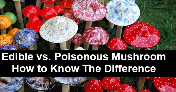 Image result for how to differentiate between poisonous and nonpoisonous mushrooms""