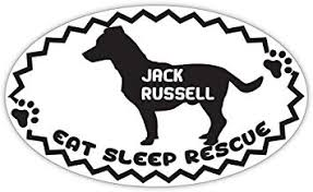 Jack Russell Terrier Dog Vinyl Decal Sticker Window Wall Bumper Animal Love Oval