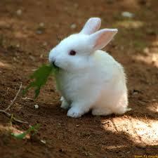 صور ارانب صغيرة منتديات درر العراق