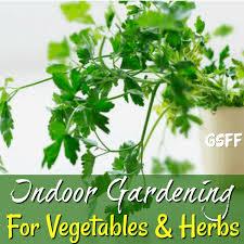 indoor gardening ideas for vegetables