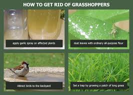 natural ways to get rid of graspers