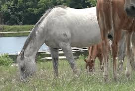 improving your horse s nutrition