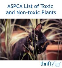 aspca list of toxic and non toxic
